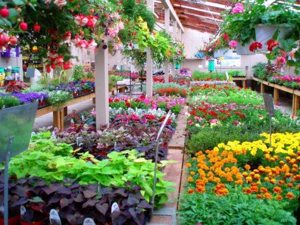 Hyams Landscaping And Garden Center : Garden center